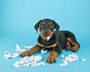 The Dog Ate My Homework!!!