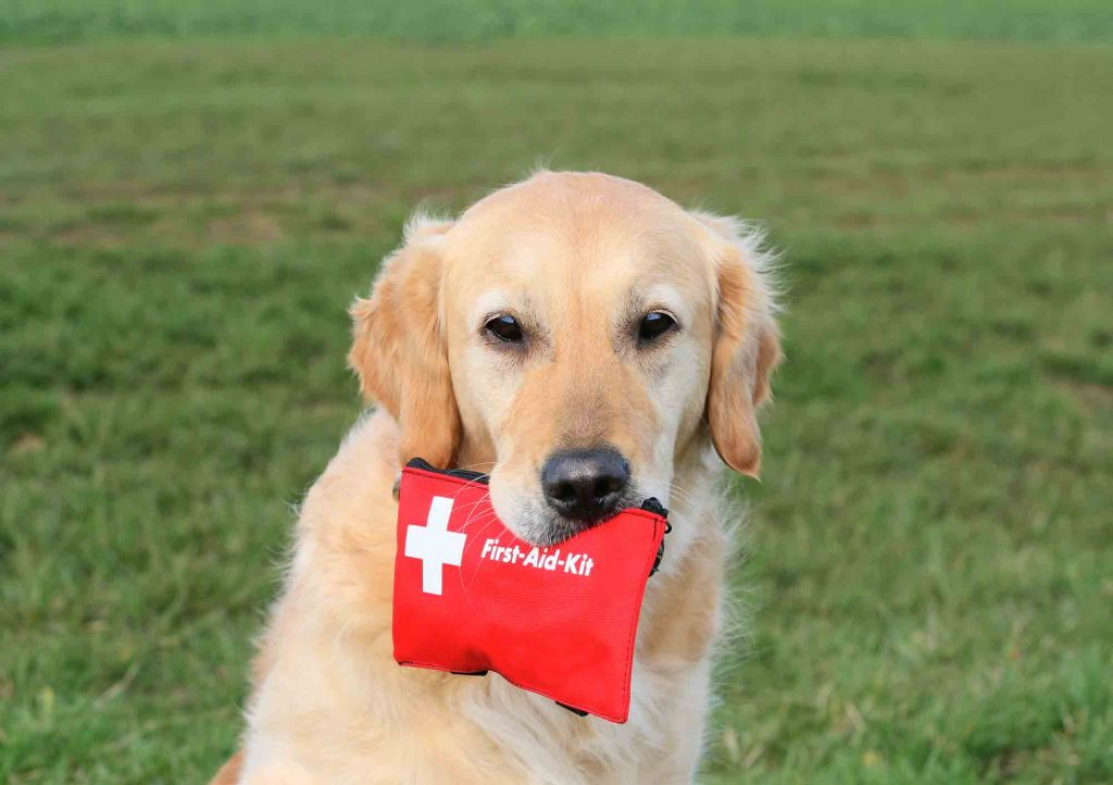 Having a pet first aid kit is part of being a responsible pet owner.