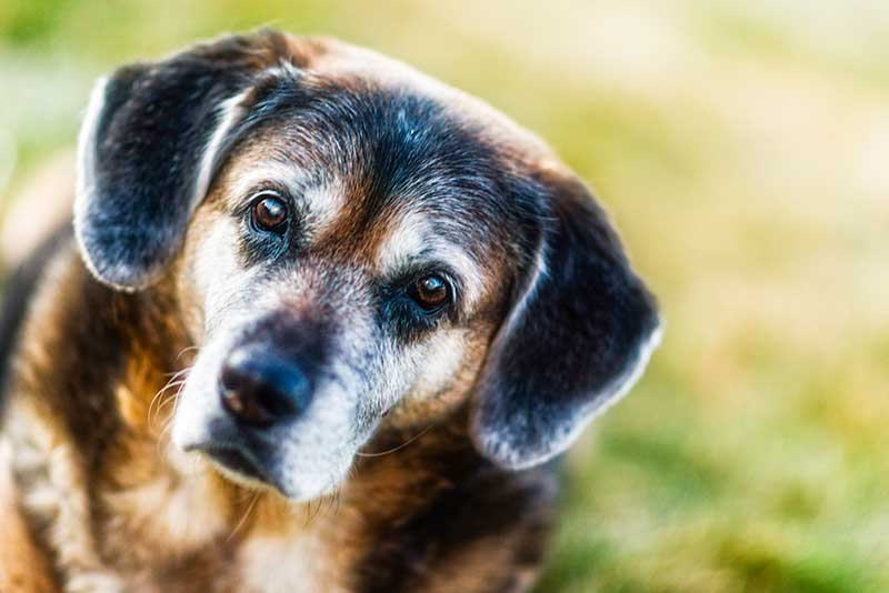 Adopting a senior pet can be the best way to rescue a pet of them all!