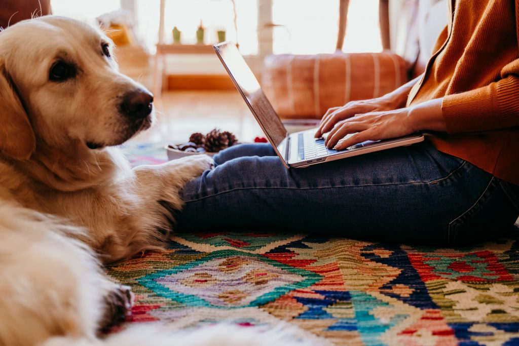 A dog sits with his owner who shops on an online pharmacy.