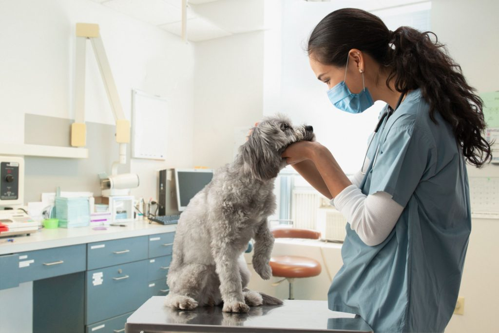 Dog in hospital with veterinarian.