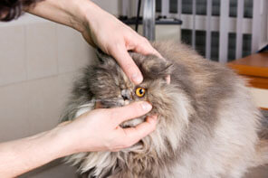 Cat having eyes examined